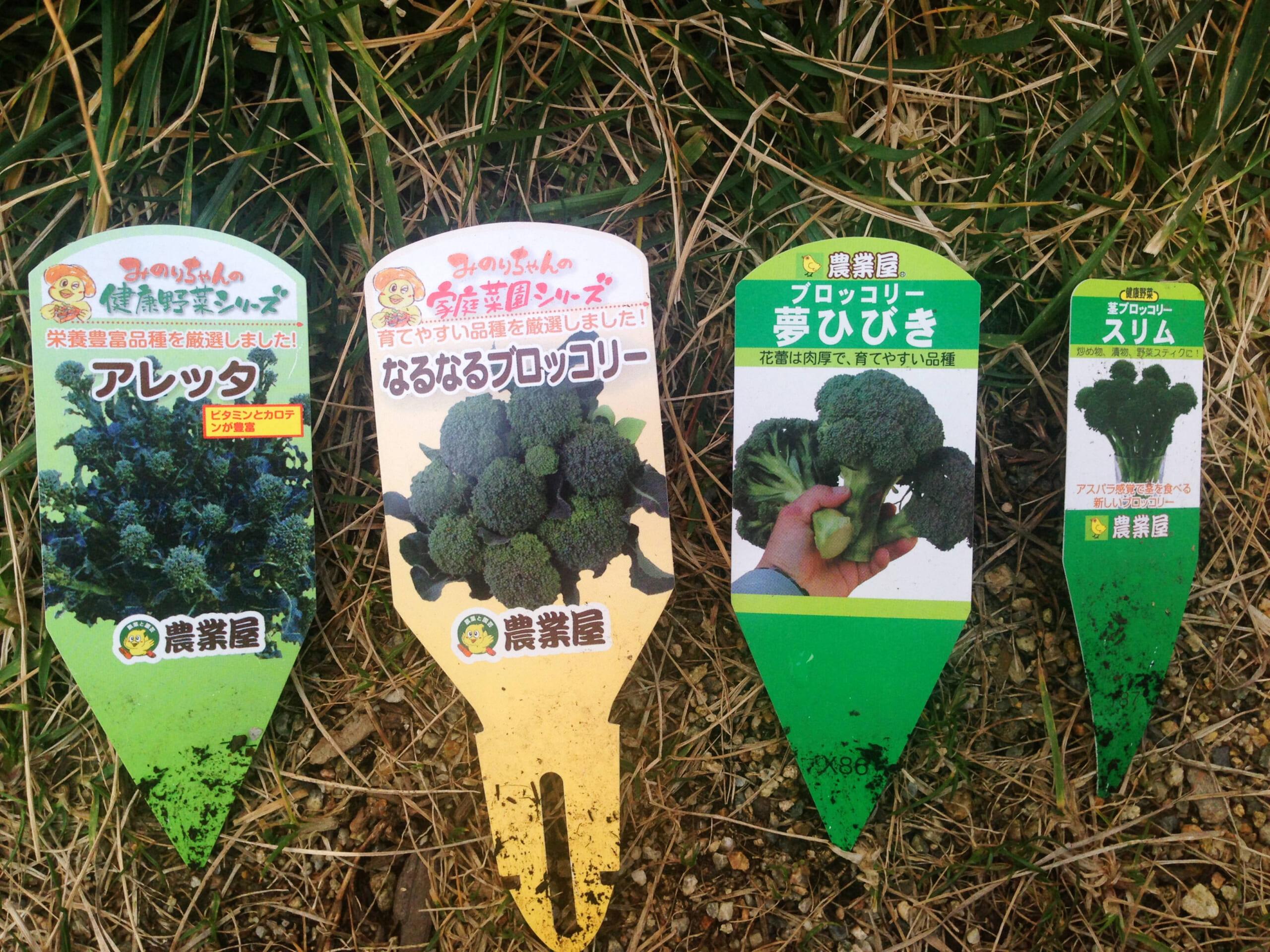 いろいろなブロッコリー栽培