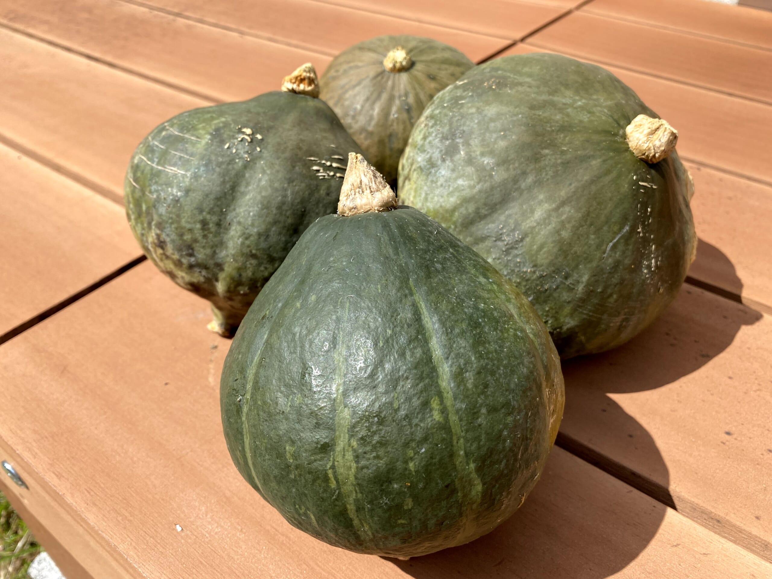 家庭菜園 かぼちゃ 豊作